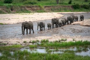 Elephants, Tarangire 2014