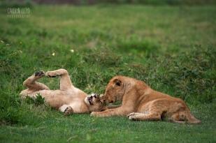 Lion Cubs, Southern Serengeti 2014