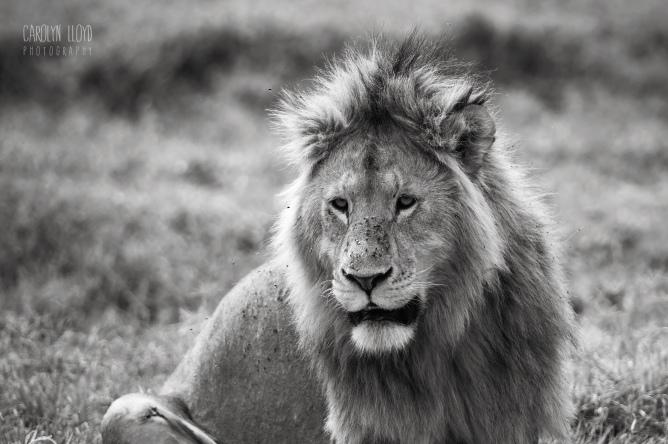 CLP_LionFlies_MCU