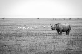 CLP_Rhino_WS
