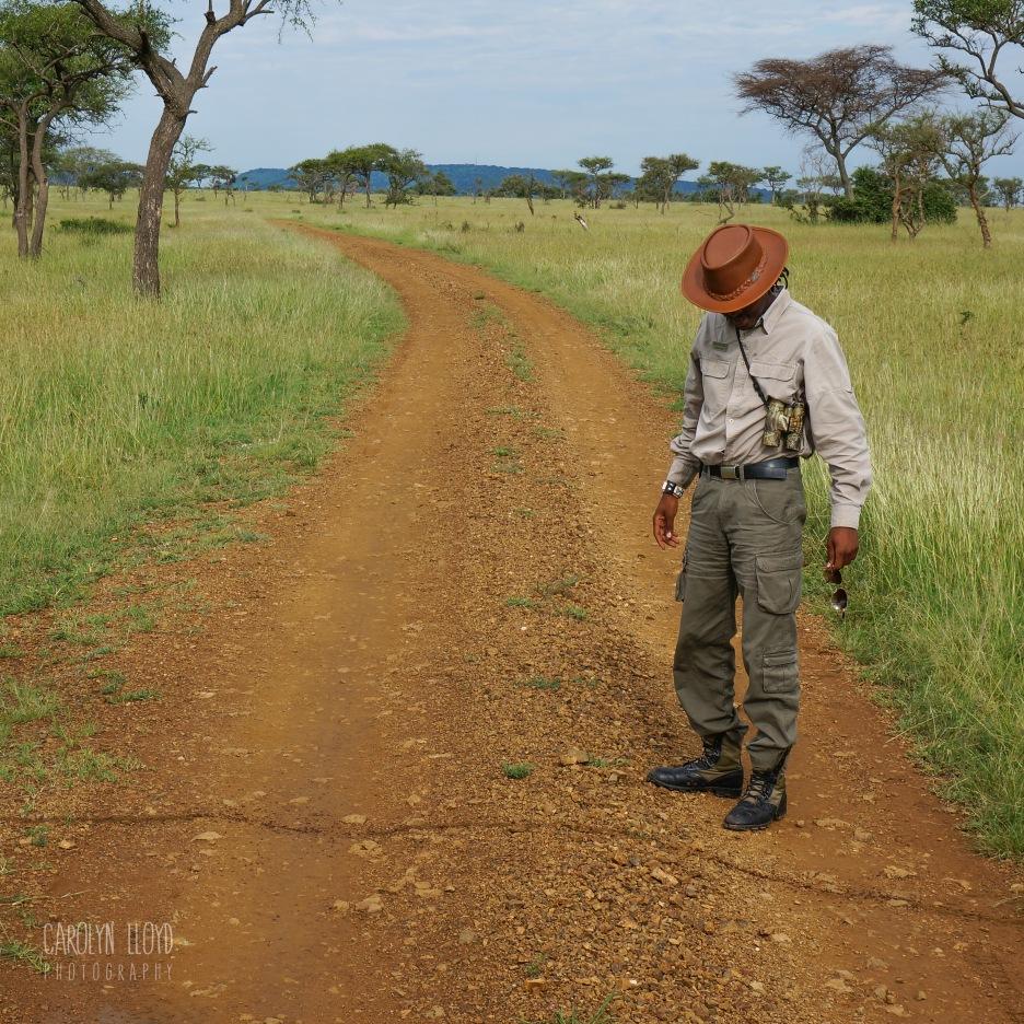 Safari Ants and Matthew, Northern Serengeti 2014