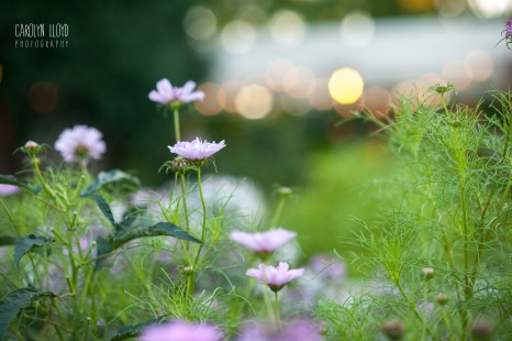 CLP_Mark_Tom_flowers