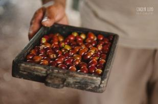 CLP_coffeebeans