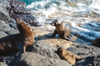 CLP_sealions_day1