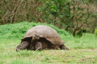 CLP_tortoise2