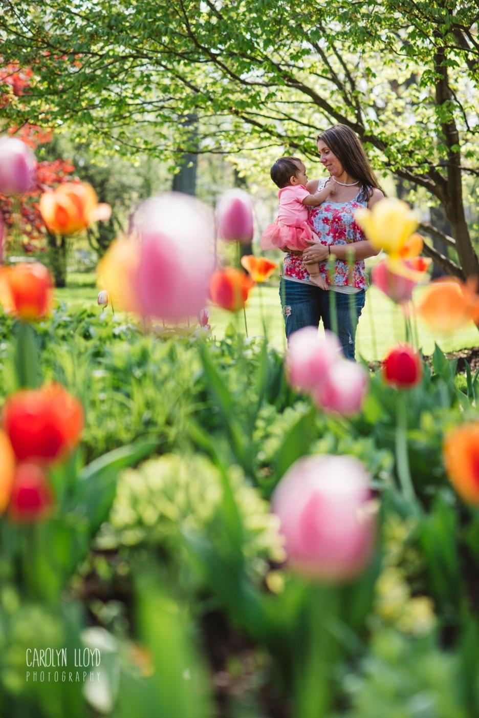 CLP_Carmella_tulips